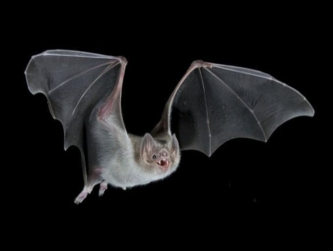 "BAT"", Birmingham: bl..."