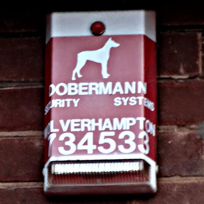 Dobermann Sarah Hoyle DSC00148 800sq
